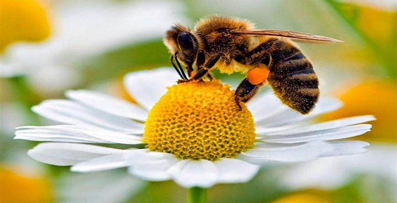 polen nasil yenir